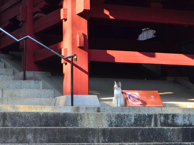 護国寺境内の紅葉、猫
