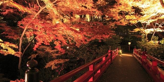 椿山荘紅葉