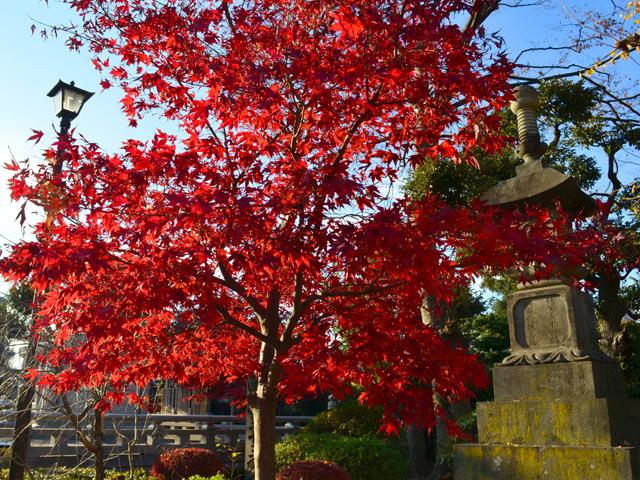 護国寺の紅葉