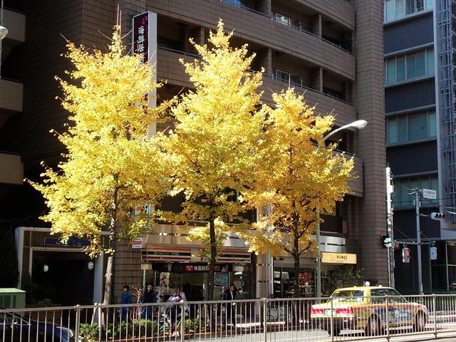 護国寺の黄葉