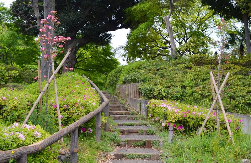 文京区関口台公園に咲く花