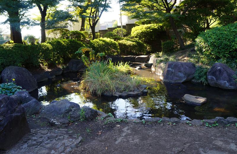 文京区関口台公園の池