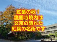 紅葉の秋!護国寺境内は文京の隠れた紅葉の名所です