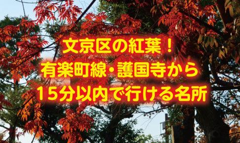 文京区の紅葉!有楽町線・護国寺から15分以内で行ける名所