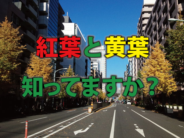紅葉と黄葉の違い!正しく知っていますか?
