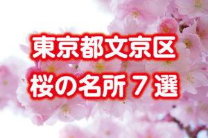 文京区【桜の名所】をまとめて7か所紹介!六義園・播磨坂・小石川後楽園・江戸川橋公園など
