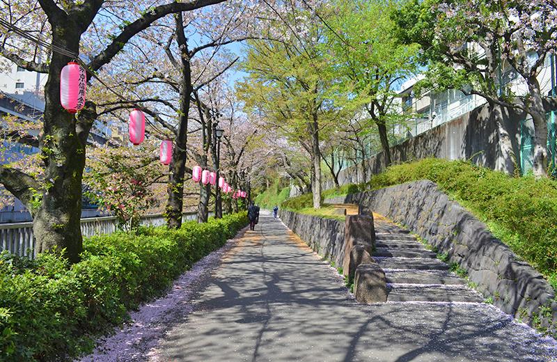 江戸川公園入口付近の桜