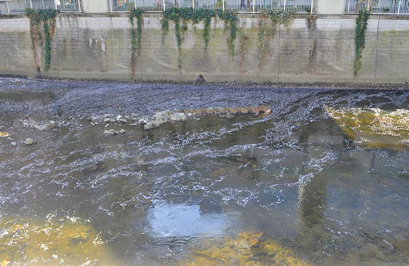 江戸川公園、神田川を流れる花びら