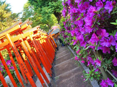 根津神社の乙女稲荷の千本鳥居