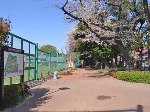 桜の木、花見。目白台運動公園