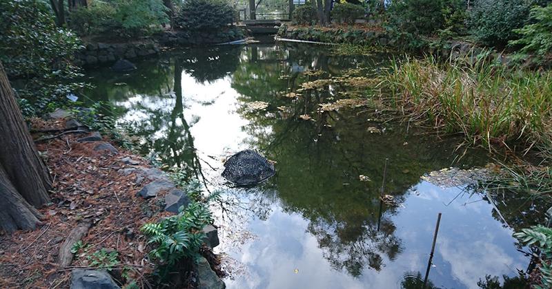 神田川の源流を訪ねて、井の頭公園へ