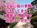【春直前】文京に桜の季節がやってきた!護国寺境内で花見はいかが?